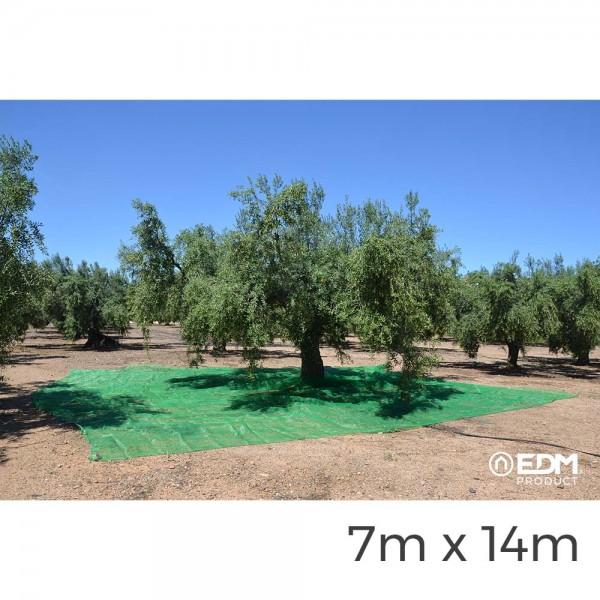Manto para recoleccion verde aceituna 7x14m